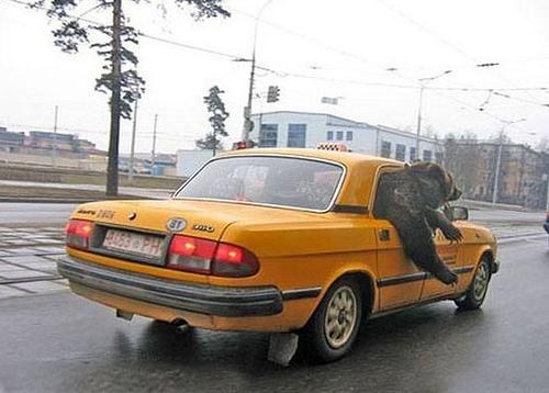 Cabbie, follow that car!