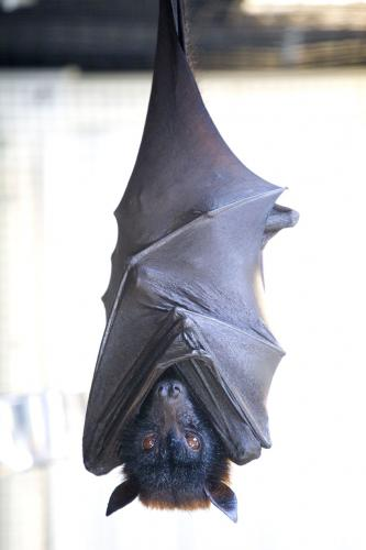 upside-down-bat
