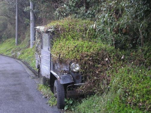 grassy-jeep