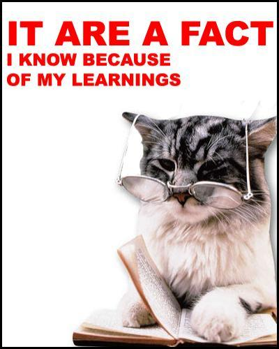it are fact.thumbnail it are a fact lolcats Humor Forum Fodder Cute As Hell Animals