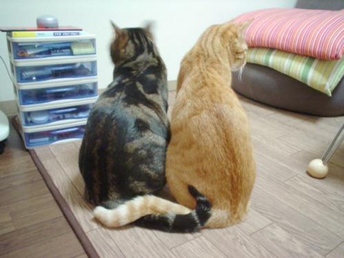 cat-friends