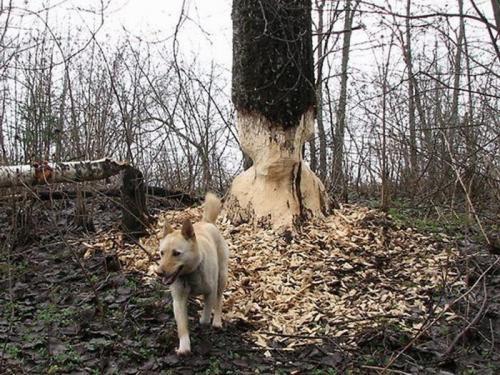 dog-eats-tree