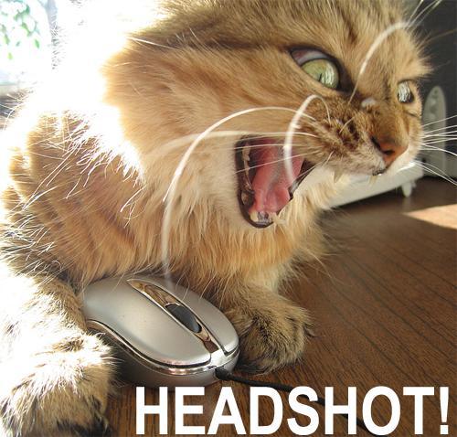 kitty-snipe
