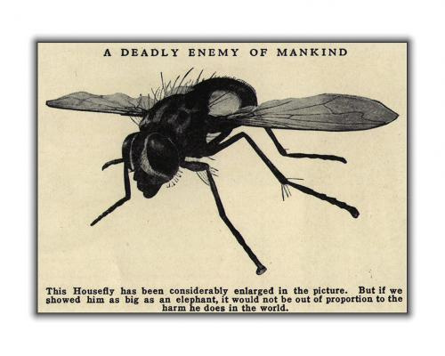 deadly-housefly