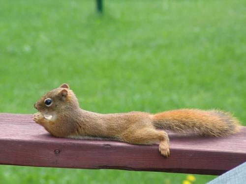 nut-resting