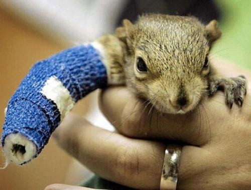 squirrels-broken-arm