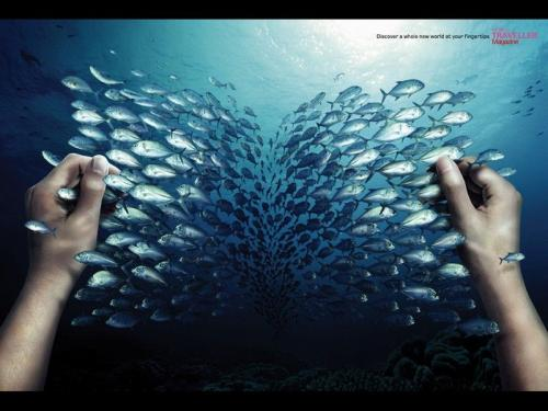 fish-book