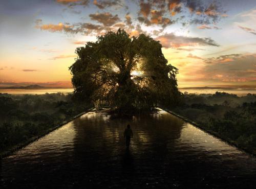 big-talking-tree