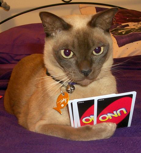 uno-cat