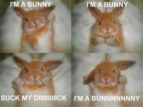 bunny-dick.jpg