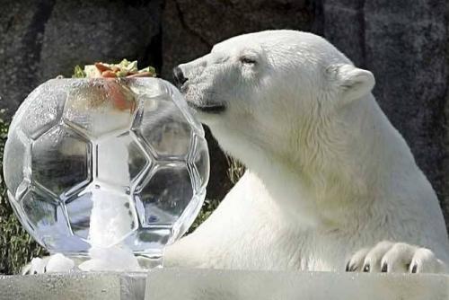 polar-bear-ice.jpg