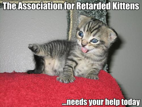 retard cat.thumbnail The Association for retarded kittens needs your help today Humor Forum Fodder Cute As Hell Animals