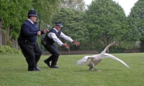 cops-vs-bird.jpg