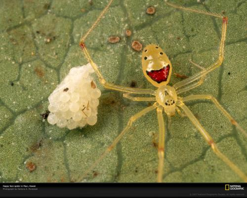 happy-spider.jpg
