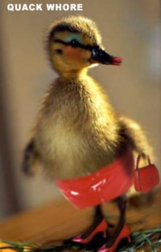 quack-whore.jpg