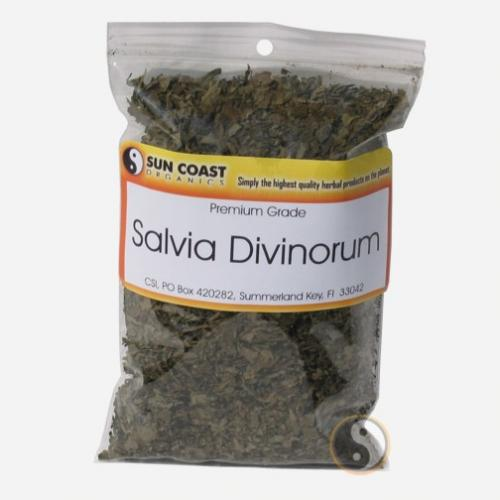 salvia-divinorum.jpg