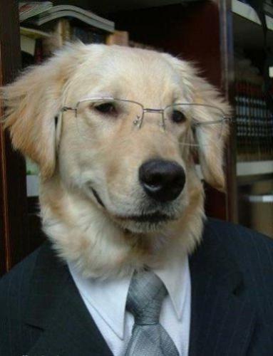 smart-dog.jpg