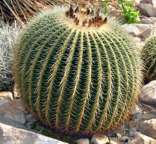 super-cactus.jpg