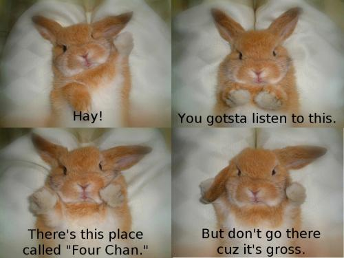 bunny-4chan.jpg
