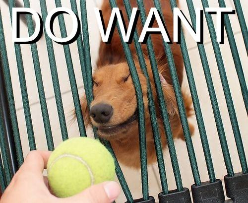 do-want-doggie-ball.jpg