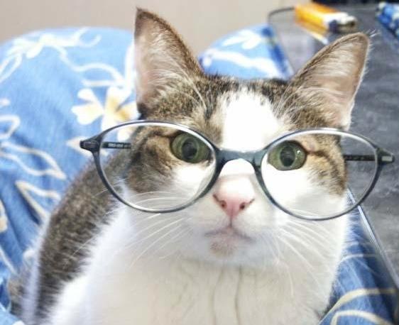 smarty-cat.jpg