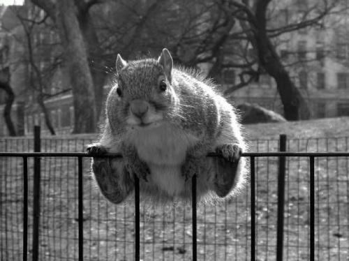 squirrel-squat.jpg