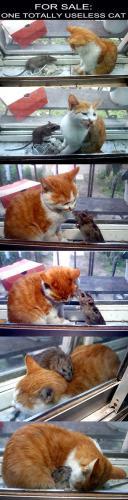 useless-cat.jpg