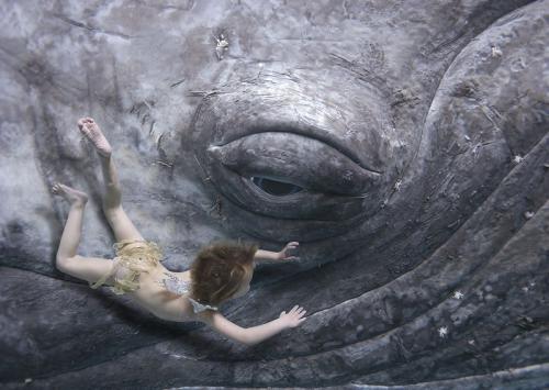 whale-eye.jpg