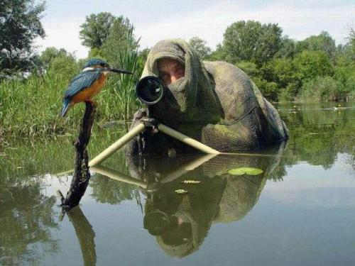76445996.thumbnail bird photographer wtf