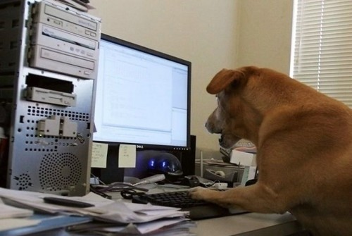 dog internet 500x335 A Dog Using The Internet Humor Cute As Hell Animals Computers