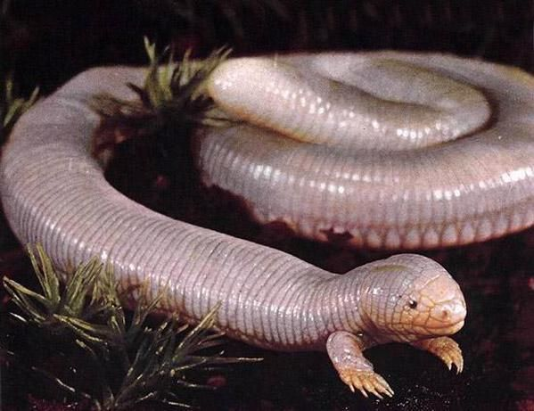 snake-with-legs