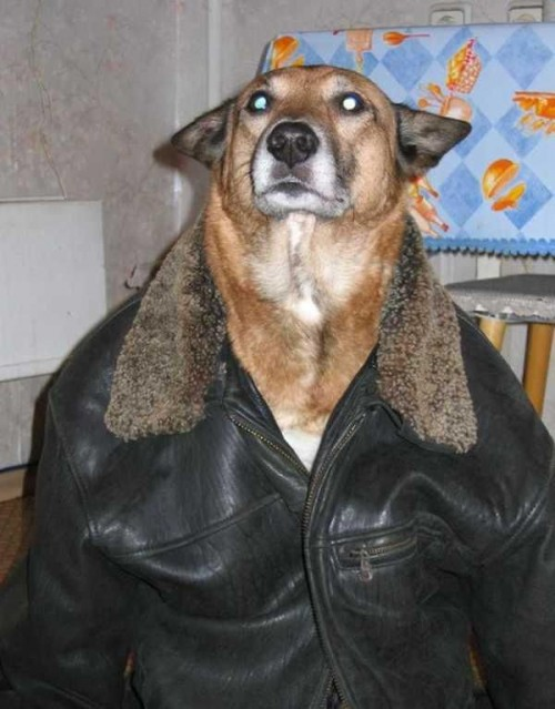 78314527 500x639 Bomber Jacket Doggie Cute As Hell Animals