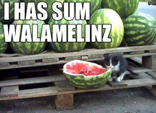 i has sum walamelinz