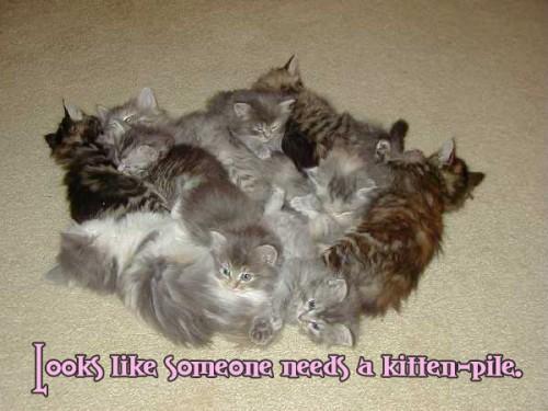 kitten pile 500x375 Kitten Pile Forum Fodder Cute As Hell Animals