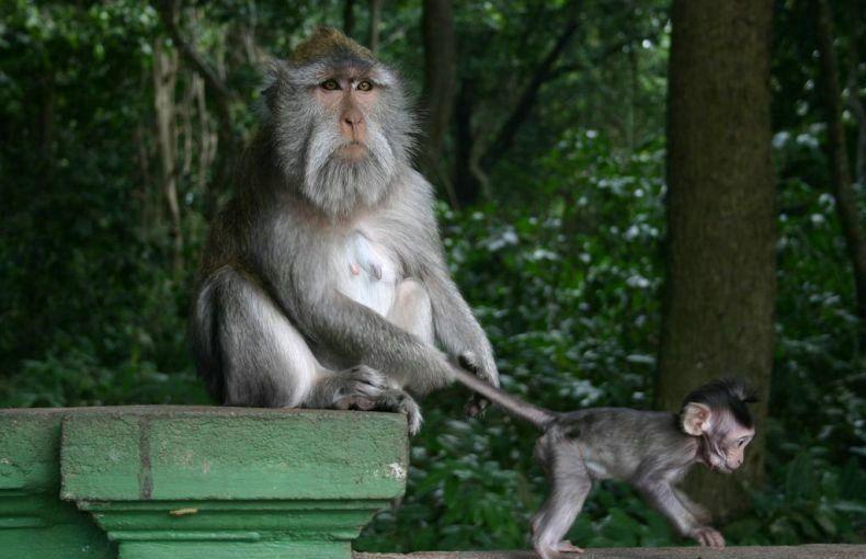 monkey-pull