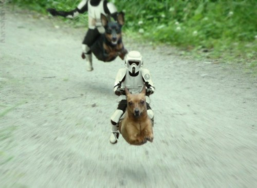 star wars dog troopers