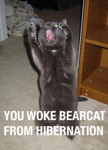 you woke bearcat from hibernation