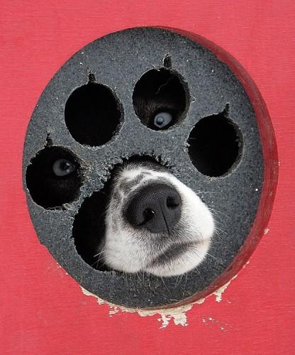 crazy eye dog