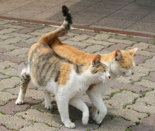 cute cats - tail twins
