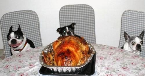 Doggy Dinner
