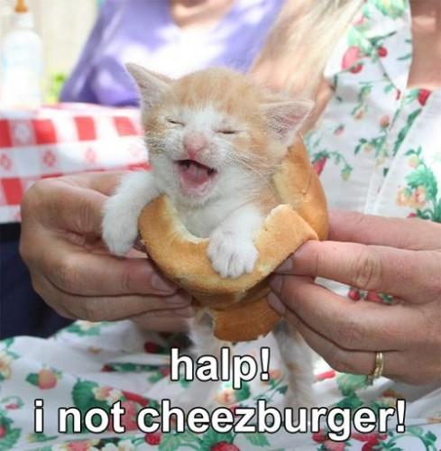 halp, i not cheezburger