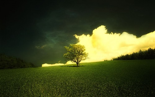 Cloudy Field with tree