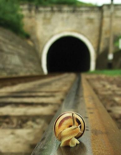 rail snail