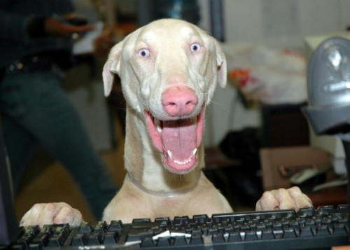 shocked computer dog