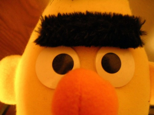 Bert's Close up
