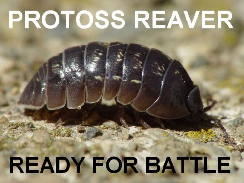 Protos Reaver Ready For Battle