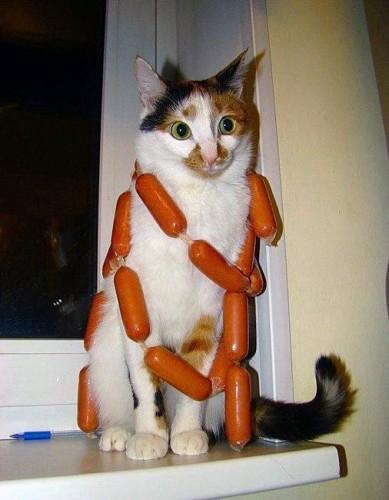 Sausage Cat