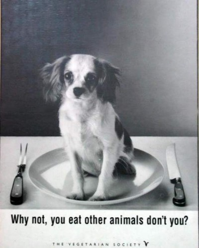 Why not, you eat other animals don't you
