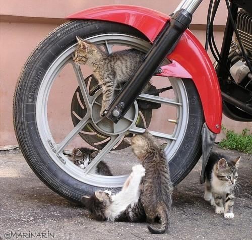 kitty crew on motorcycle