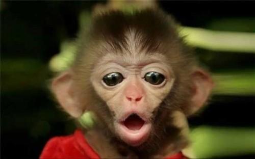 Monkey Of Love